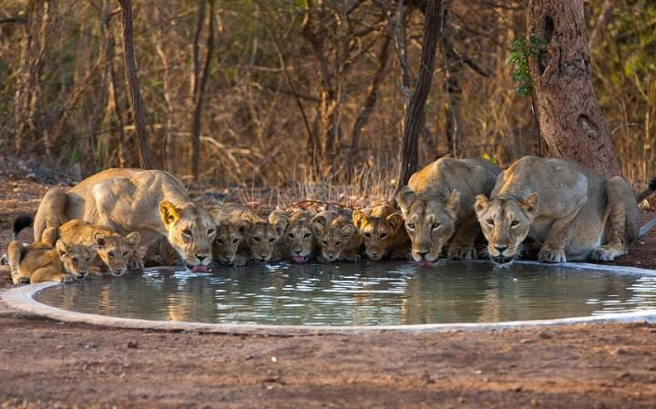 Gir Forest National Park visiting information: Entry Fees and Timings